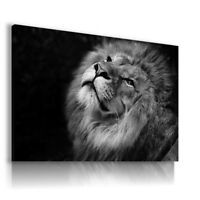 CATS KITTENS Domestic And Wild Animals Canvas Wall Art Picture AN17 X MATAGA .