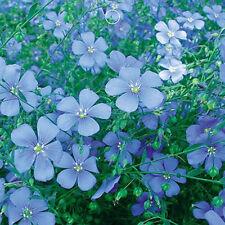 Blue Flax Llinum Perenne Flower Seed 100 Seeds Patio Garden Plants Decor