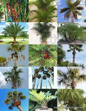 Palm Tree Mix rare palms fan exotic date florida areca hardy mixed seed 10 seeds