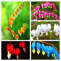 100 PCS Seeds Heart Flowers Bonsai Dicentra Spectabilis Peony Garden Plants NEW