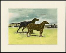 CURLY COATED RETRIEVER TWO DOGS GREAT DOG PRINT MOUNTED READY TO FRAME