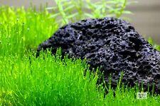 Riccia fluitans Covered Stone (Smaller Set of 3) Live Plant Aquarium Moss