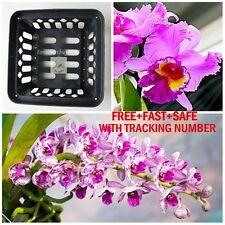 "BEST Vanda Orchid Net Pot Basket Cup 6"" Square Hanging Phalaenopsis Paphiopedil"