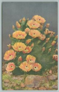 New Mexico~Prickly Pear Cactus in Bloom~Platypuntia~Vintage Postcard