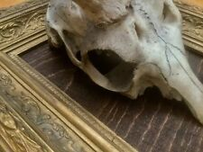 Antique Handmade Gilded Picture Frame with Mounted Deer Skull Antlers Taxidermy