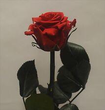 FIORI  E PIANTE ARTIFICIALI  Rosa rossa in stelo disidratata - stabilizzata