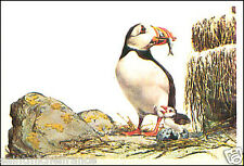 Macareux moine Atlantic puffin  AUTOCOLLANT STICKERS IMAGE ANNEES 60s
