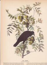 """1942 Vintage AUDUBON BIRDS #156 """"CROW"""" Full Color Art Plate Lithograph"""