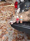 100% FRESH BUCK IN RUT URINE deer lure,deer pee, sent, rifle, Hunting,Archery