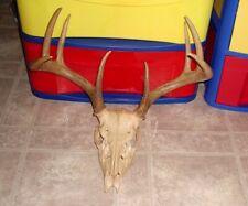 Whitetail Deer Antlers European Mount Rack Horns Sheds Skull Man Cave Taxidermy