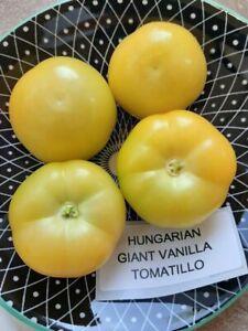 Tomatillo - Hungarian Giant Vanilla - Physalis ixocarpa - 40+ seeds - Semillas