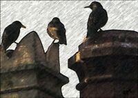 Chimney Starlings - Unique Photographic Art Print 7x5 inch