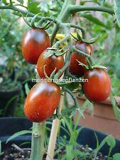 """Ungarische Tomatensamen/""""Japanese Black Trifele/"""" samenfest von unserer Farm"""
