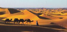XXL-Ansichtskarte: Kamelkarawane und Tuareg - Man in der Sahara