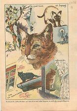Cats Katzen Chats de Gouttière le Siamois le Guetteur 1938