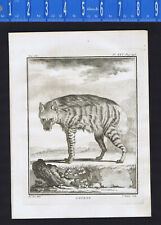 Striped Hyena, L'Hyarna -  1782 Buffon Copper Plate Engraved Animal Print