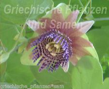 Passiflora Ligularis 6 Semillas frescas púrpura Sueño de flores Frutos