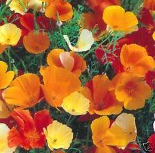 POPPY- PAPAVER - Californian Single Mixed - 50 seeds