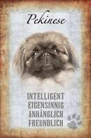 Pekinese Hund Dog Blechschild Schild gewölbt Metal Tin Sign 20 x 30 cm