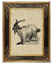 Angora Goat Art Print on Antique Book Page Vintage Illustration