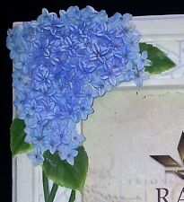 """Beautiful Blue Hydrangea Green Leaves Cream Picture Frame Raj Collection 4"""" x 6"""""""