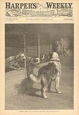 Dogs, Innocence Abroad, Kennel, Bull Dog, St Bernard, Vintage 1890 Antique Print