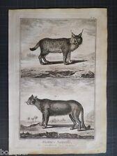 Le Couguar + Le Lynx - Histoire Naturelle 18e siècle Gravure ORIGINALE in-folio