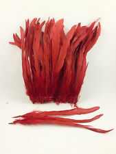 "50 RED DYED SOLID ROOSTER TAILS CRAFT MILLINERY FEATHERS 8""-10""L"