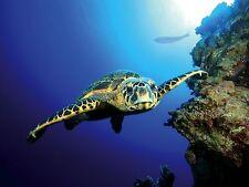 Cartel de fondo Tetra tortuga Coral Arrecife Acuario Peces Tanque profundo mar telón de fondo