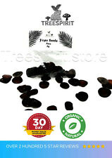 ❤️ Yopoo Seeds anadenanthera peregrina Angico Cohoba Treespirit🐸