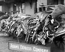 ANTIQUE HUNTING REPRO 8 x 10 PHOTOGRAPH MICHIGAN 1917 WHITETAIL DEER ON RAIL CAR