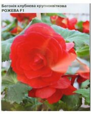 Pink Begonia Seeds large-tuber F1 10 seeds Бегония S1119