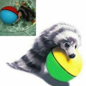 Squirrel Chase Ball Motorised Ball + Weasel Assorted Colour Uk