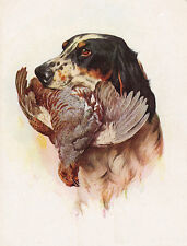 ENGLISH SETTER CHARMING DOG GREETINGS NOTE CARD BEAUTIFUL DOG WITH BIRD