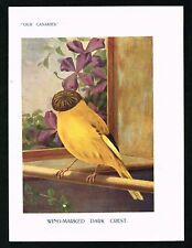 1911 Wing-Marked Dark Crest Canary, Antique Print - St.John