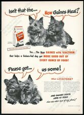 1948 Norwich Terrier photo Gaines Meal dog food vintage print ad