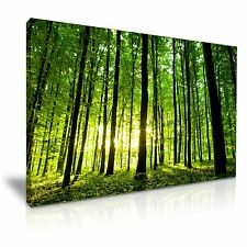 Large Green Forest Tree Sun Canvas Wall Art Picture Print 76cmx50cm