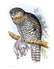 """Vintage John Gould Australian Bird Art CANVAS PRINT~ Powerful Owl 24""""X18"""""""