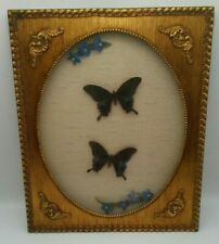 BUTTERFLY Taxidermy Framed Ornate Gold Painted Wood Shadowbox RARE PAPILIO HOPPO