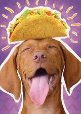 Dog Taco Head Avanti Humorous Funny Birthday Card