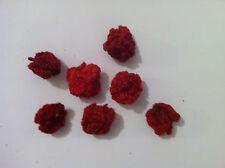 7 Pot Primo Dried Chilli Pods - The Hot Pepper Company