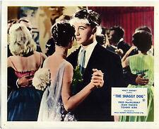 SHAGGY DOG 1959 Fred MacMurray, Jean Hagen, Tommy Kirk 10x8 LOBBY CARD SET