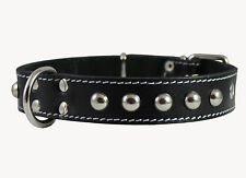 "Genuine Leather Dog Collar Studded 15""-20"" neck 1.25""wide  Amstaff"