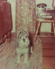 Vintage Mid Century Mod Schnauzers Pooch Bff Cute Dog Call Me On The Phone Photo