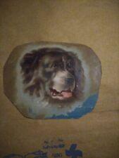Vintage Hand Drawing Of A St.bernard Dog