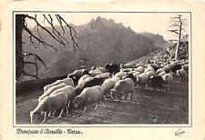 BR38112 La corse troupeau au col de Bavella mouton sheep france
