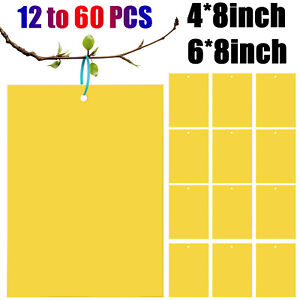 Max 60 PCS Sticky Fly Traps Gnat Trap Flies Insect Glue Catcher w/ Hanging Ropes