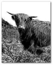 Highland Cow Print, Black And White Photography Art, 8 x 10 inches, Unframed