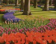 "Jigsaw Puzzle TULIPS IN BLOOM NETHERLANDS 1000 Pcs 18"" x 23"" Puzzlebug"