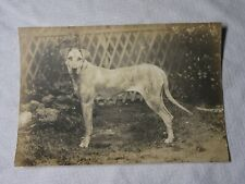 More details for photograph of 1917 crufts winning great dane dog
